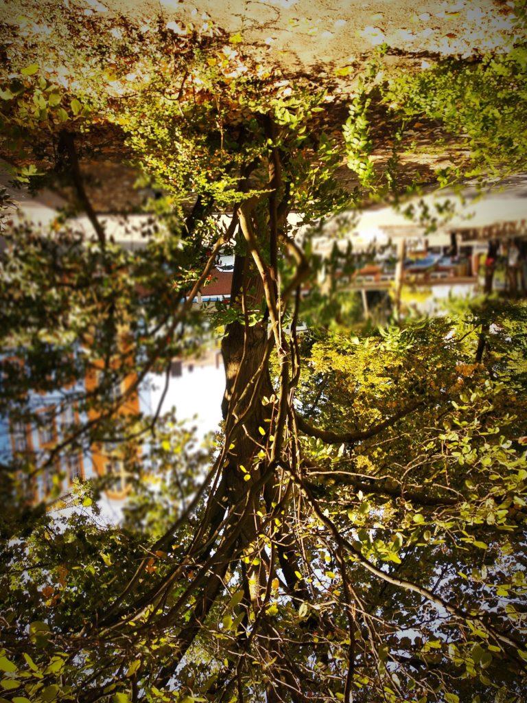 Baum mit grünen Blättern, auf den Kopf gespiegelt