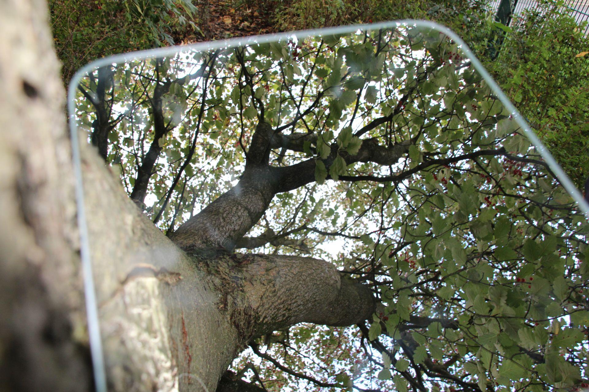 Ein Baum von unten Fotografiert, mit vieln Ästen und Blättern