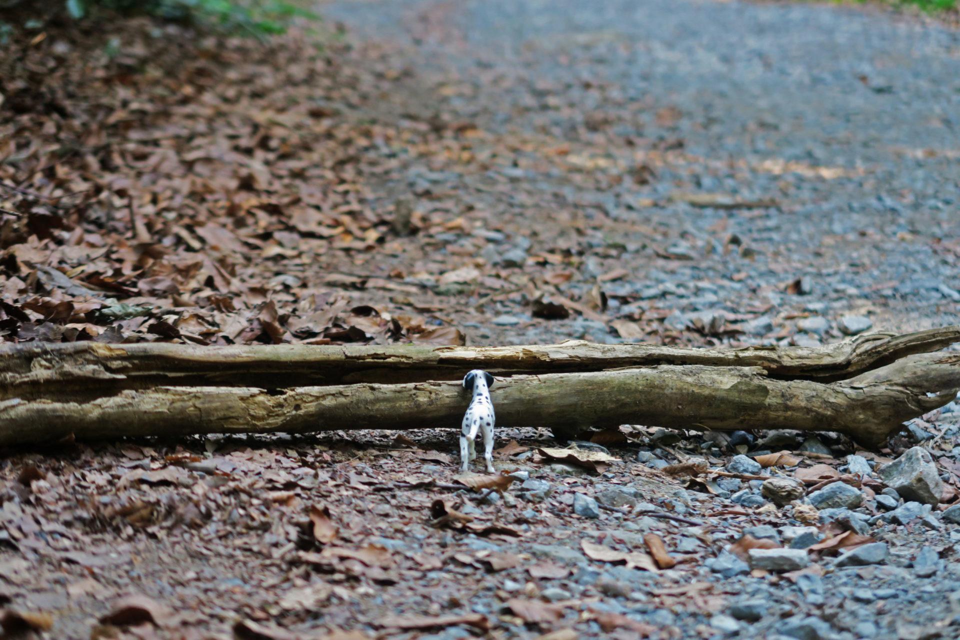 Miniaturhund steht vor einem Ast im Wald