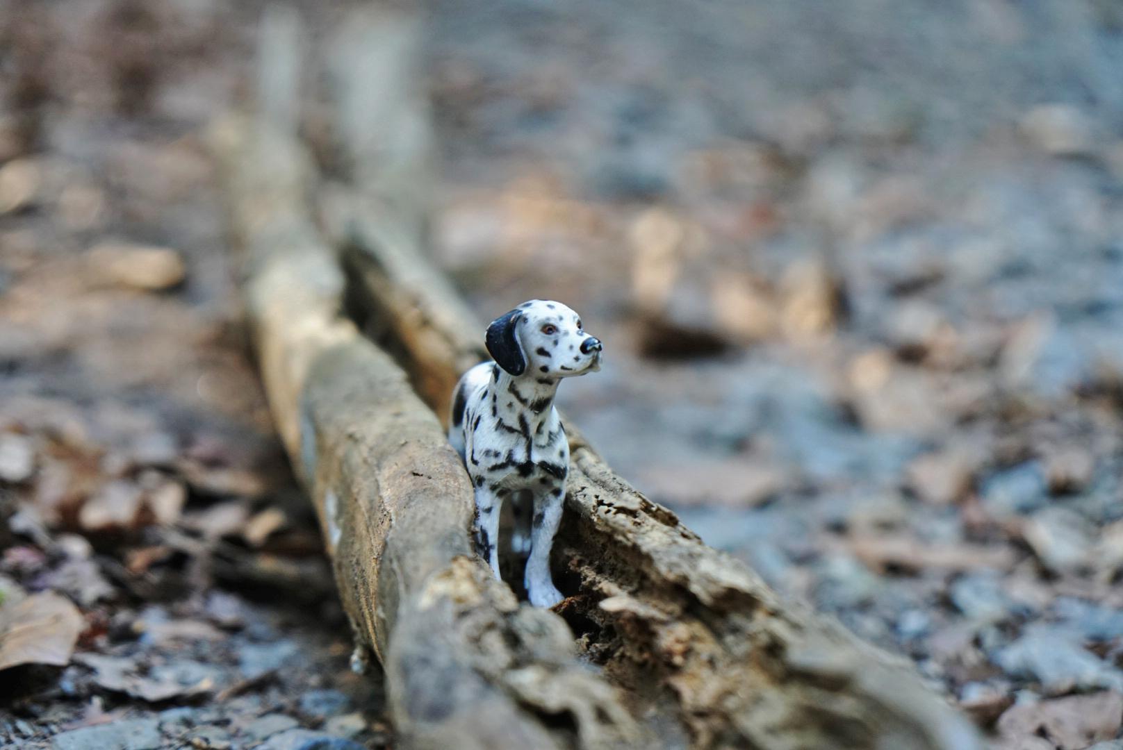 Miniaturhund steht in einem Ast