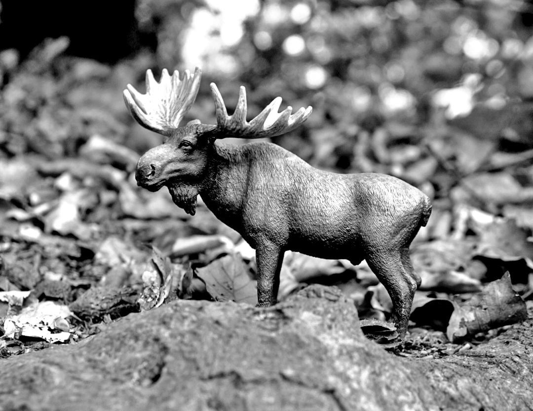 Miniaturelch zwischen Steinen in schwarz weiß