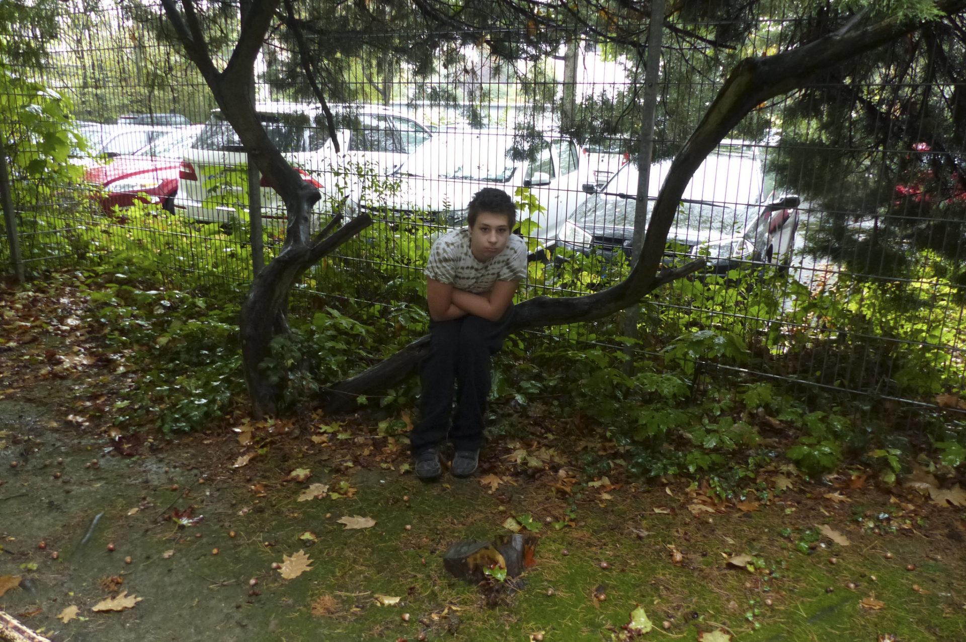 Ein Kind demonstriert auf einem Ast an einem Baum