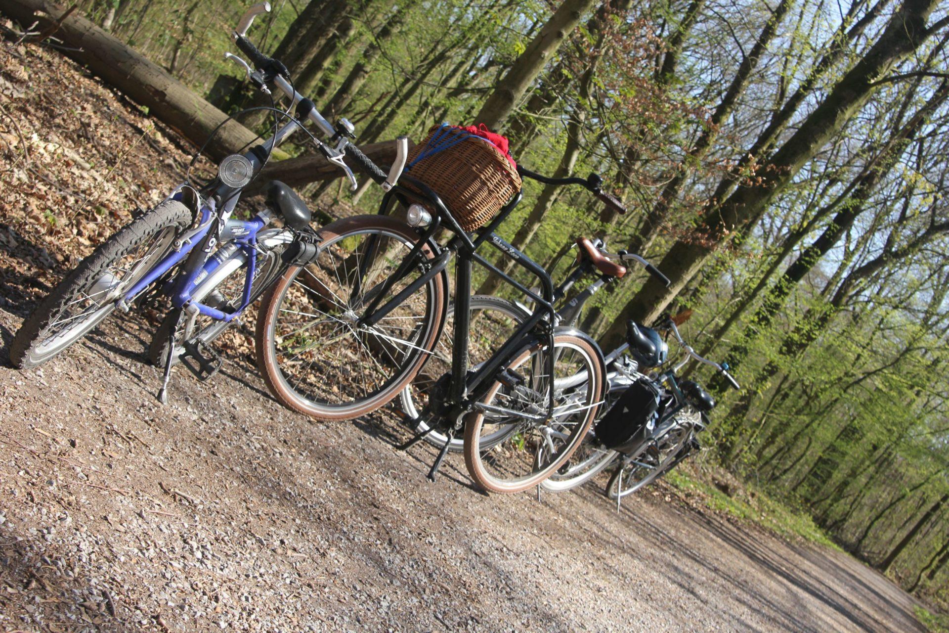 drei Fahrräder parken im Wald